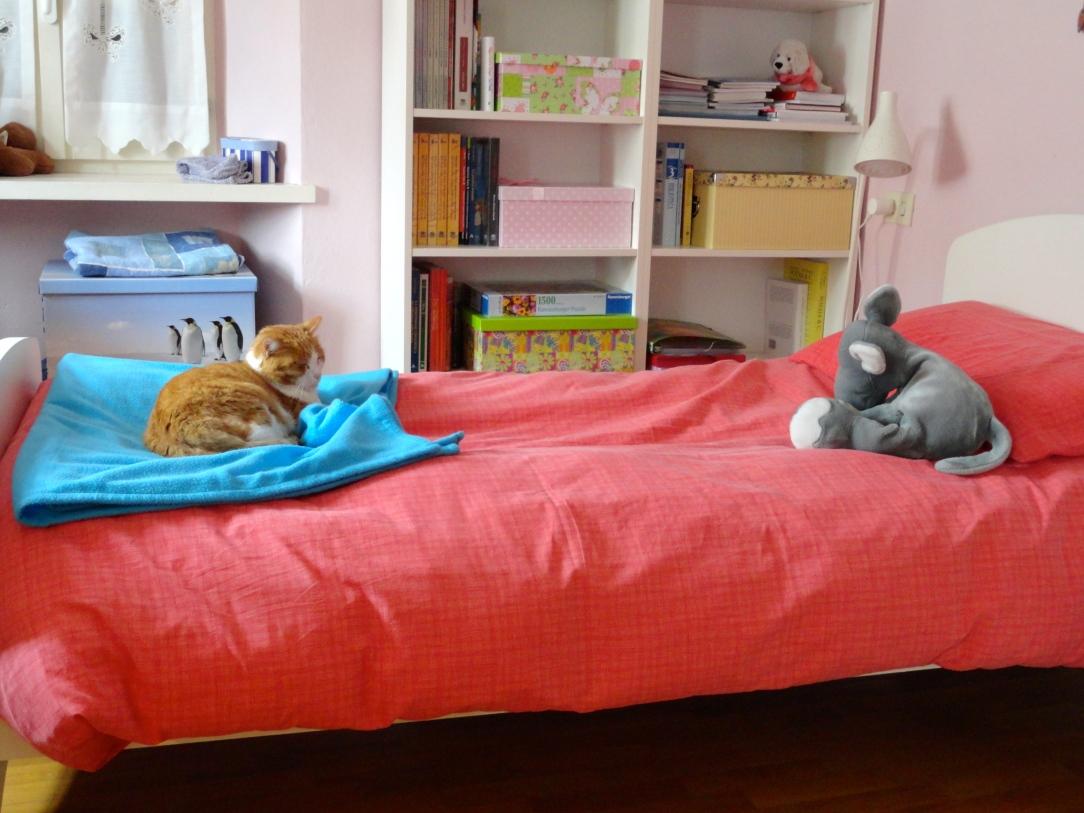 Uno scatto dal mio quotidiano: il confronto tra gatto e peluche!